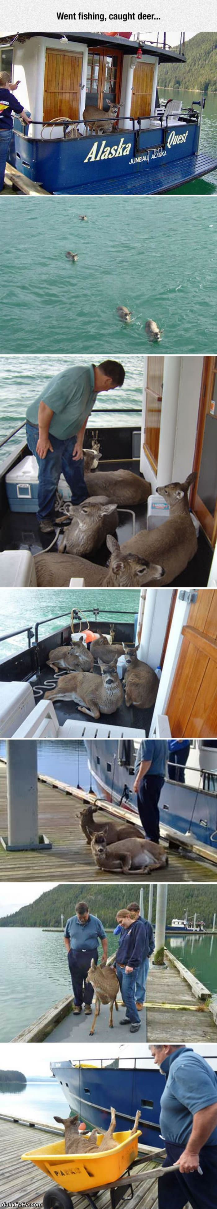went fishing caught deer funny picture