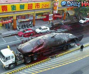Whale on a truck