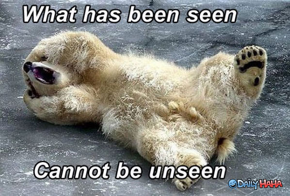 Traumatized Bear funny picture