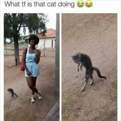 what is that cat doing