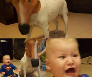 what did you do to the dog funny picture