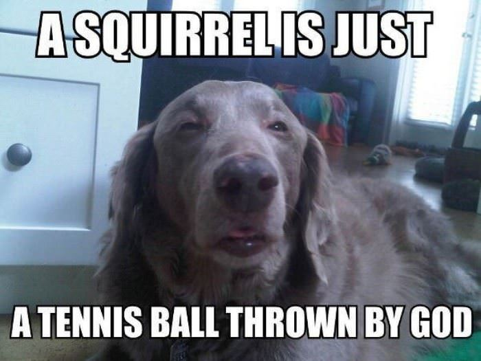 what is a squirrel funny picture