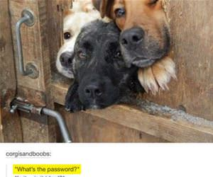 what is the password funny picture