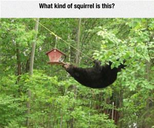 what kind of squirrel is this funny picture