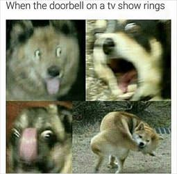 when a doorbell rings on tv