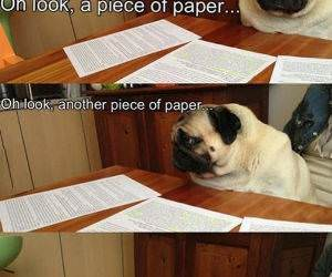 When Doing Homework funny picture