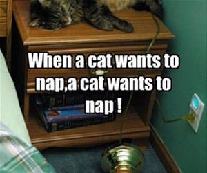 when a cat wants to nap funny picture