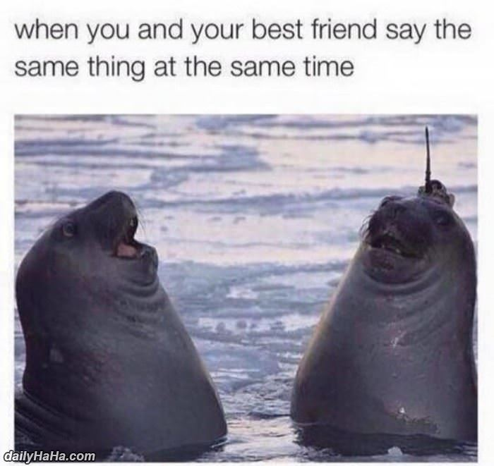 your friend say the same thing funny picture