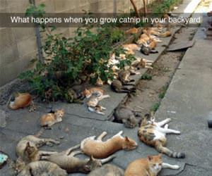 when you grow catnip funny picture