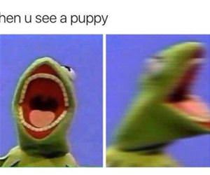 when you see a puppy funny picture