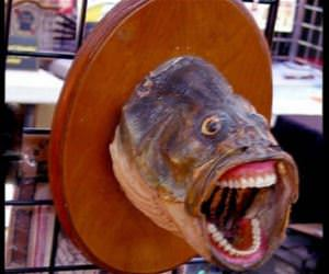 where do i get this fish funny picture