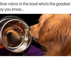 who is the goodest boy funny picture