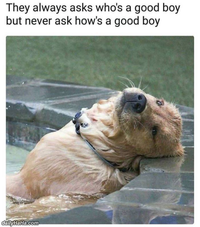 whos a good boy funny picture