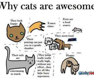 Cats Are Awesome funny picture