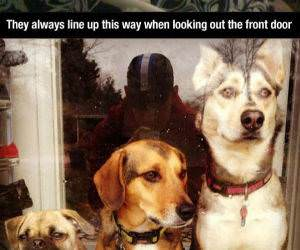 why dogs are awesome funny picture