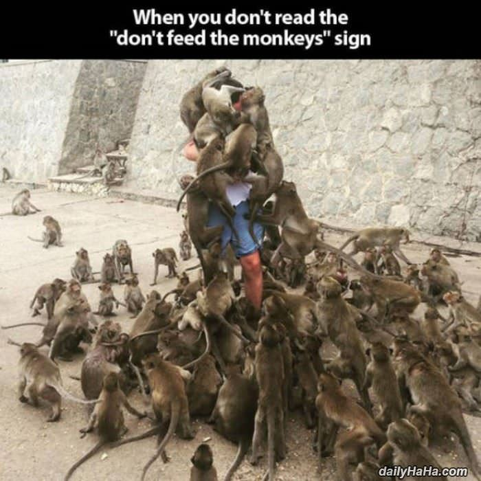 why you dont feed the monkeys funny picture