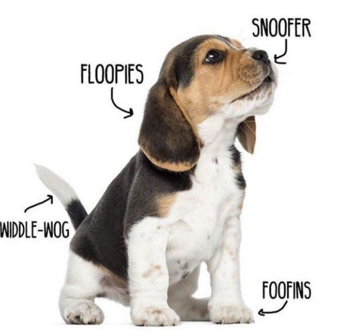 woofer diagram funny picture
