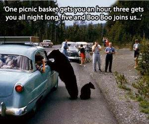 A Working Bear funny picture
