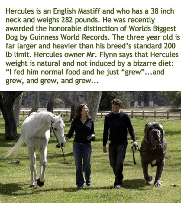 worlds-biggest-dog.jpg