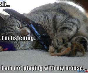 Mouse Play funny picture
