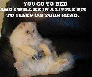 You Go To Bed funny picture