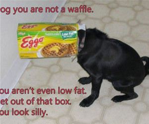 you are not a waffle funny picture