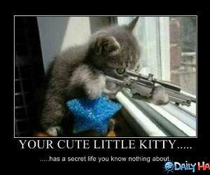 You Cute Kitty funny picture