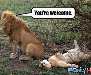 You Are Welcome funny picture