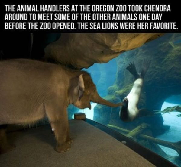 elephant sea lion meet at oregon zoo train