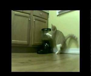 2 days of Cat vs Automatic Feeder Funny Video