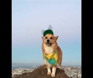 Adorable Corgi Models Propeller Hat Funny Video