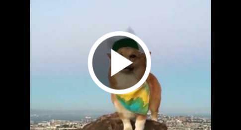 dailyhaha funny videos