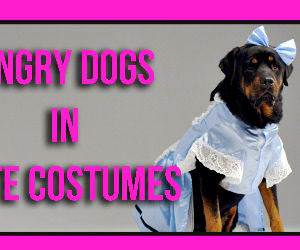 Angry dogs in cute costumes Funny Video