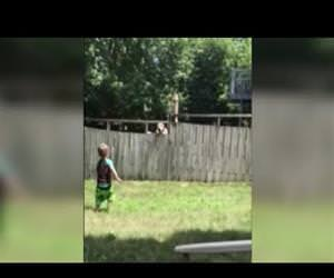 Boys play catch with neighbors dog over fence Funny Video