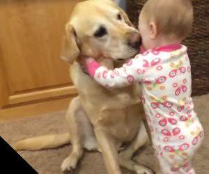 Cute dogs and babies compilation