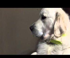 Dog Refuses to Give Up Pacifier Funny Video