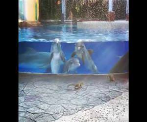 Dolphins watching squirrels Funny Video