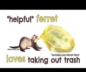 Ferret helps take out the trash Funny Video