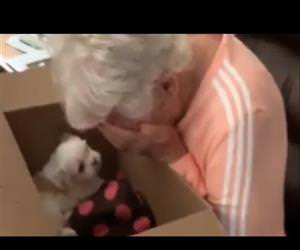 Grandma brought to instant tears when surprised with new puppy Funny Video