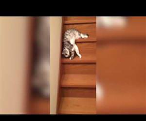 Lazy Cat Down the Stairs Funny Video