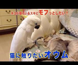 Parrot wants to touch Cat Funny Video