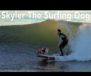 Skyler The Surfing Dog Funny Video