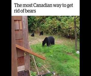 The most Canadian way to get rid of bears Funny Video