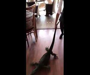 Waitress Drags Out Unwanted Guest