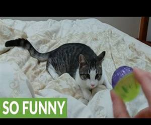 a dog in the body of a cat Funny Video