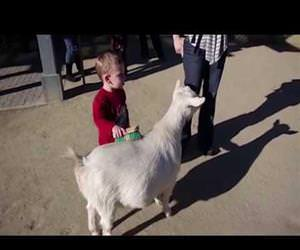 a goat fart scares a kid Funny Video