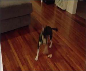 Adorable Puppy and Bone Funny Video