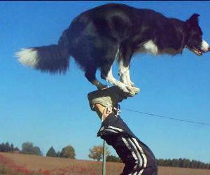 Amazing border collie tricks Video