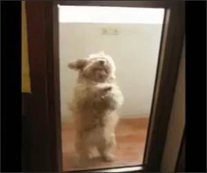 Amazing Dog Dance Funny Video