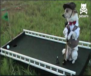 The Amazing Golfing Dog Video